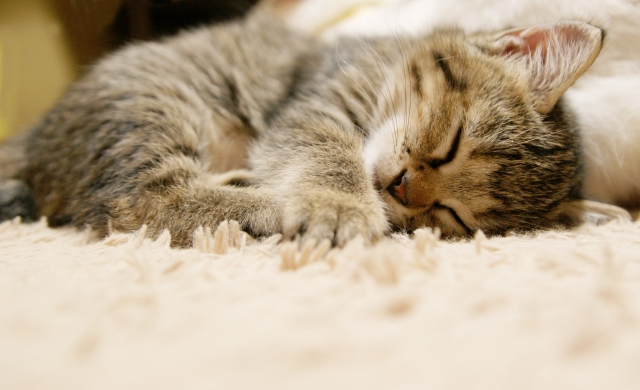 健康づくりのための睡眠12箇条