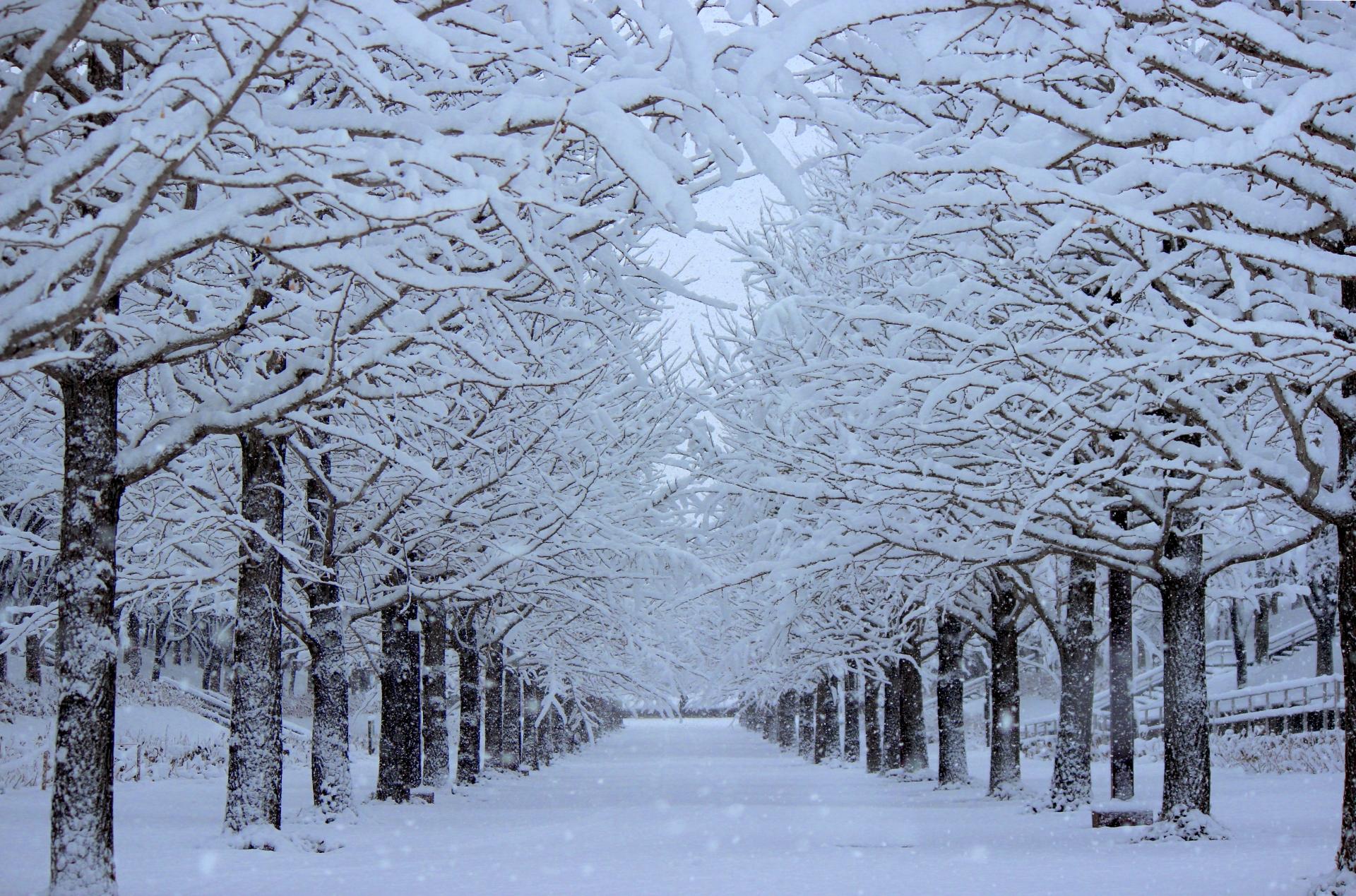 冬季うつ,ウインターブルー、季節性感情障害   実は身近なうつ病